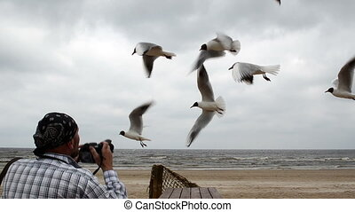 photographer shoot gull
