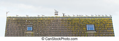 Gulls on a roof