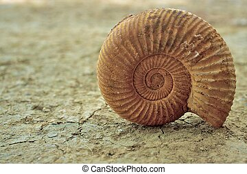 Antique snail shell