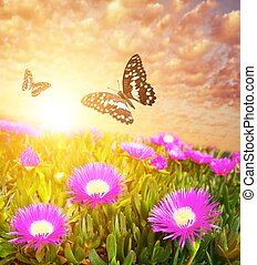Butterflies over flower field