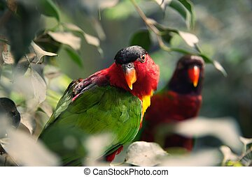 Two parrots on a tree.