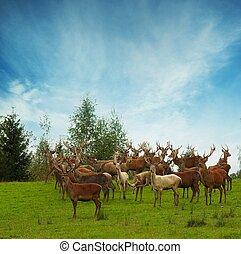 Deer flock in natural habitat