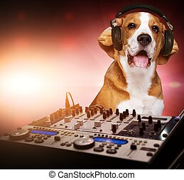Beagle dog wearing headphones behind DJ mixer