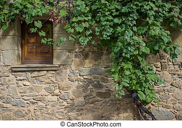 Wild grape growing over wall with small window