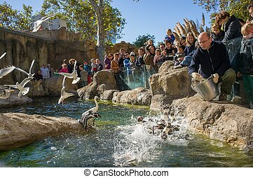 BARCELONA - OCTOBER 28: Feeding penguins in Zoo De...