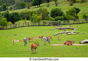Pasture - Different Hoofed Animals At The Pasture Field