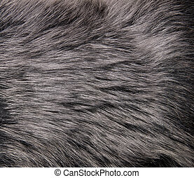 abstract fur background - close up shot of abstract fur...