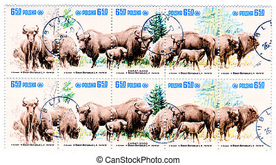 bisons on Polish vintage postage stamp, - American bisons on...
