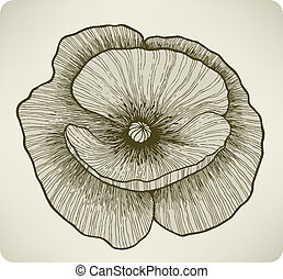 Poppy flower, hand drawing. Vector illustration.