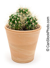 Potted Cactus - Prickly cactus in a brown flowerpot Isolated...