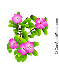 blooming flowers in plant on white background
