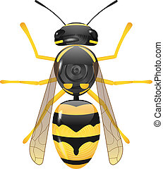 wasp - vector glossy symetric wasp on white background, eps...