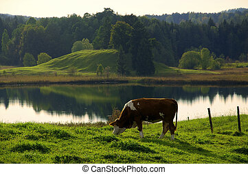 Grazing Cow in idyllic landscape