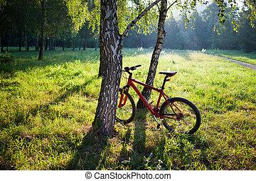 debout, Printemps, bouleau, Parc, ensoleillé, Vélo, Coffre,...