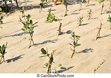 Reforestation - Fresh planted trees on a reforestation...