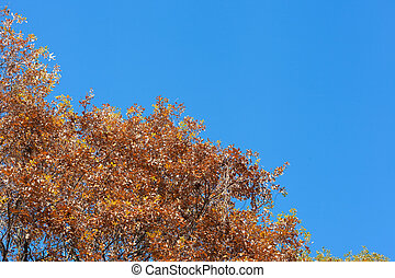 blue sky of early winter and deciduous trees - This is a...