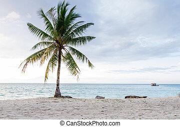 beautiful beach with coconut