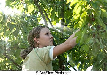 Girl and cherries - Girl picking cherries
