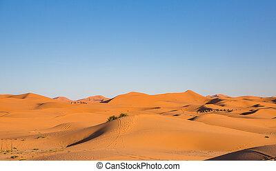 Camel Caravan - Side view of camel caravan on desert at...