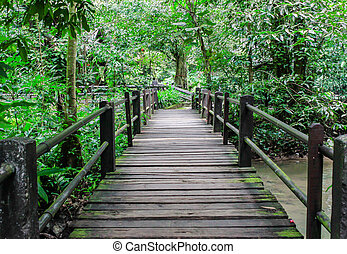 A timber boardwalk leading away into the forest
