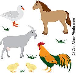 Farm animals set 2 - Farm animals vector set isolated on...