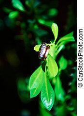 植物, 戒指, 綠色, 婚禮