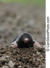 mole-close-up