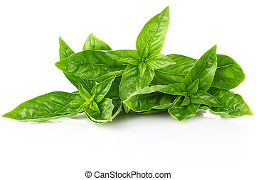 twig fresh basil isolated on white background