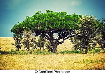 serengeti, tansania, afrikas, landschaftsbild, savanne