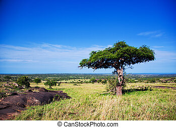 Savanna landscape in Africa, Serengeti, Tanzania - Savanna...