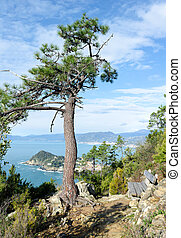overview of a pine - tilt of a pine in Sestri Levante in...