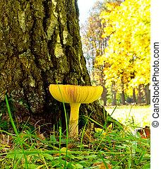 mushroom near the tree in the park