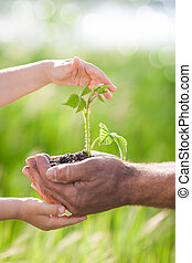 Young plant against green background - Human hands holding...