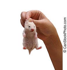 hamster - Women\\\'s hand holding hamster