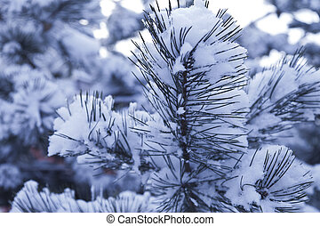 Fir-tree in snow - The fir-tree after snowfall is covered...