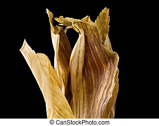 192 dried corn husk - Close shot of a dried corn husk...