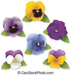 Pansies and Johnny Jump Ups (Violas). Spring flowers...