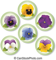 Pansies and Johnny Jump Ups Buttons - Pansies and Johnny...