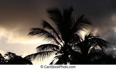 Palm Tree - Palm tree against the sunset