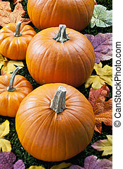 cropped view of halloween pumpkins arranged in a row -...