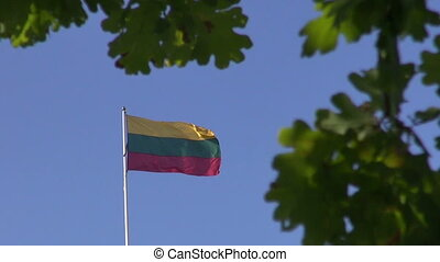 Lithuanian national flag in wind and oak leaves