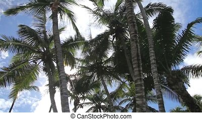 Palm Tree - Palm tree shaking in the wind