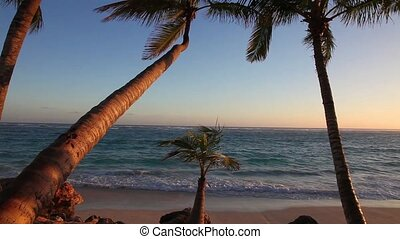 Palm Tree - Palm trees at sunrise
