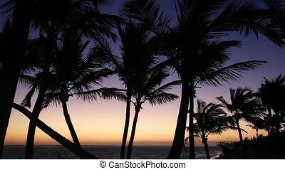 Palm trees at sunrise