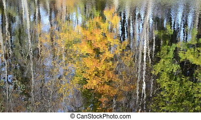 lake reflect autumn tree