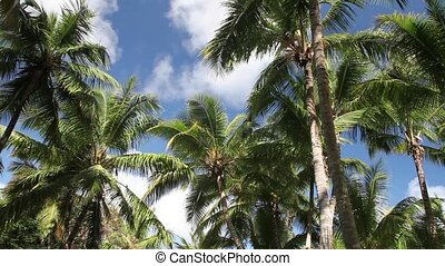 Palm Tree - Palm tree in the wind