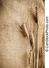 Wheat on sacking fabric