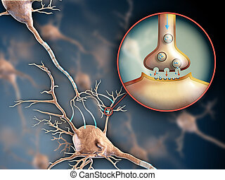 Neuron synapse - Two neurons connecting by using...
