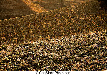 fertile soil - plowed fields one after the other
