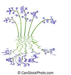 blåklocka, Blomstrar